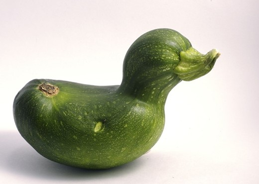 Duck courgette